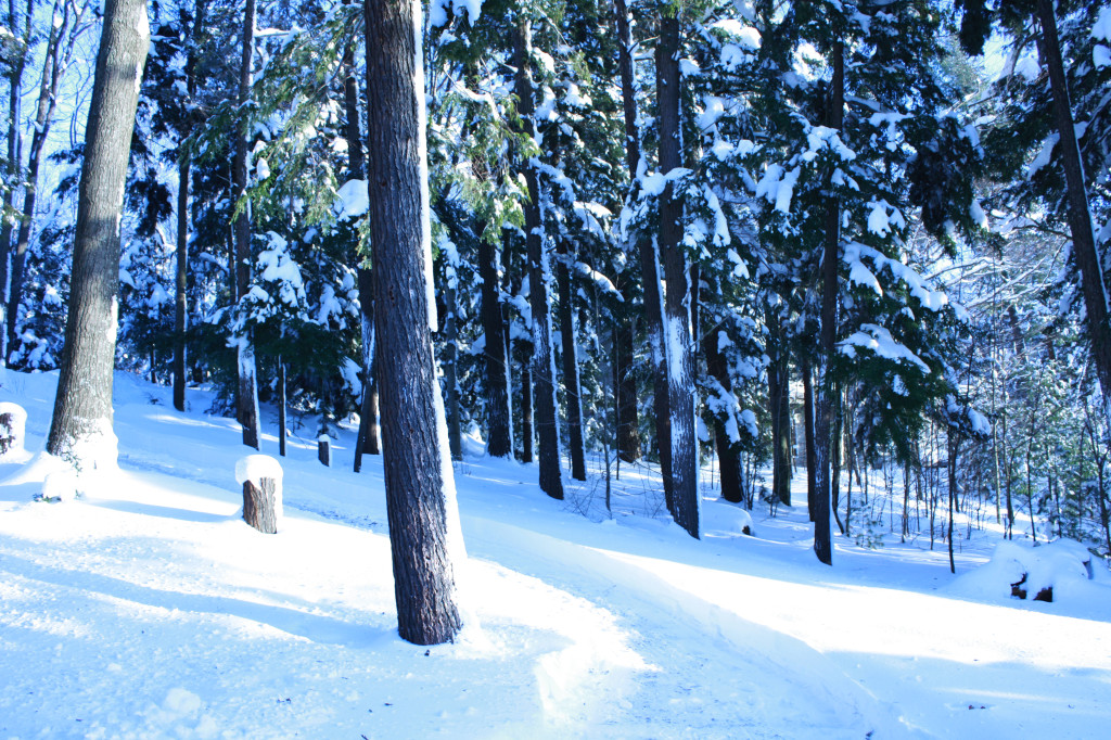 quintessential view of a winter wonderland forest